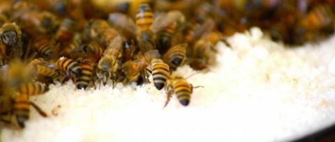 Eindelijk verbod op gevaarlijke bestrijdingsmiddelen voor bijen?