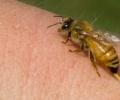 Bijensteken informatie