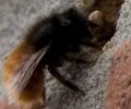 Hoe bouw ik een bijenhuisje
